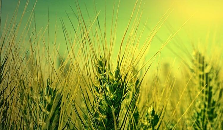 Agri-Tech